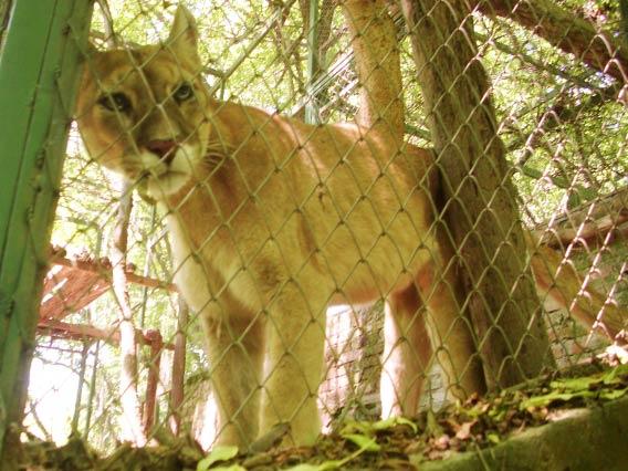 Argentina en la reserva ecoloacutegica - 4 3